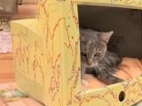 Дом для кошки из старого монитора