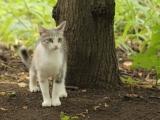 Красивая дворовая кошка в лесу