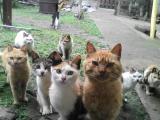 Кошки разных окрасов