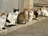 Дворовые кошки гуляют