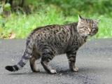Полосатый дворовый кот