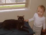 Порода кошек гавана фото