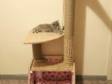 Фото дома для кошки сделанный своими руками
