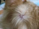 Признаки пиодермии у кота
