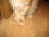 Проявление рахита у кошек