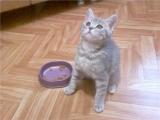 Рахит в начальной стадии у маленького котенка
