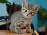 Признаки рахита у кошек: искривление конечностей