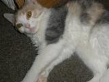 При рахите у кошки воспаляются суставы