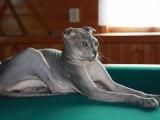 Фото. Украинский левкой
