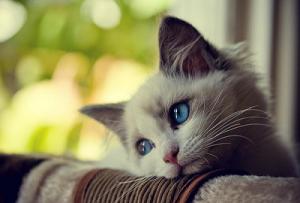 Как выяснить возраст кошки