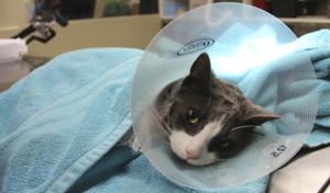 Состояние кота после операции