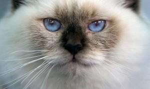 Как лучше смотреть на кошку