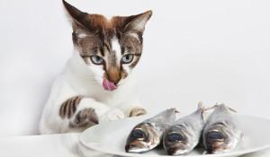 Рыба для кошек