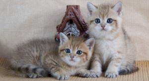 Определяем пол котенка по повадкам
