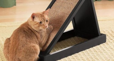 Приучаем котят и кошек к когтеточке