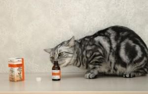 Кот и валерьянка