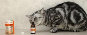 Осложнения у кошек после противоглистных препаратов
