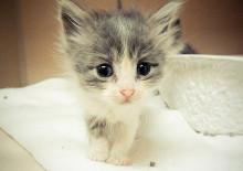 Самые красивые клички для кошек