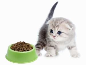 Котенок и миска с кормом