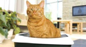 Кот сидит на лотке