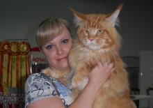 Отзывы хозяев о котах мейн-кун