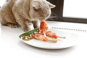 Еда для британских кошек