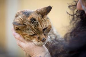 Кошка Поппи