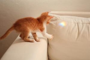 Адаптация котёнка в квартире и доме