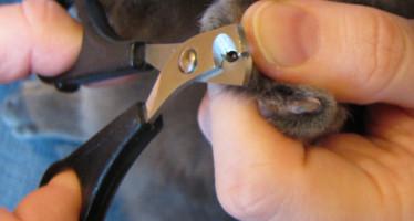 Когтерезки для котов