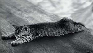 Осложнения после кастрации кота