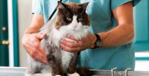 Диагностика токсоплазмоза у кошек
