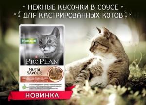 Корм проплан