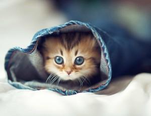 Котенок и как дать ему необычную кличку