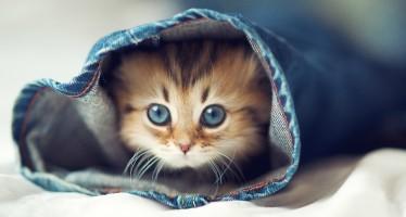 Котенок и выбор клички