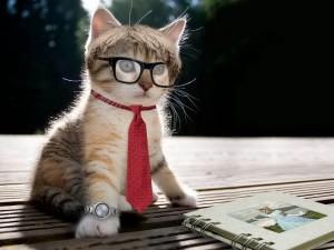 Кличка для котенка