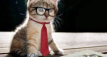 Прикольные клички для котенка