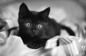 Черный котенок и как дать ему кличку