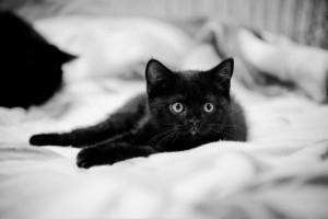 Как назвать черного котенка
