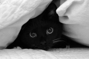 Черный котенок и его кличка