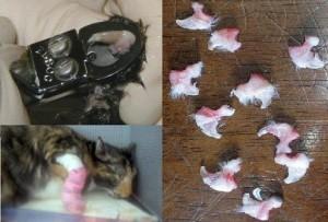 Операция по удалению когтей у кошек