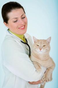 Желчекаменная болезнь у кошки