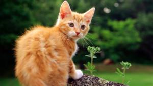 Котенок рыжего окраса