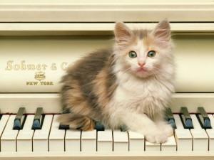 Трехцветный котенок