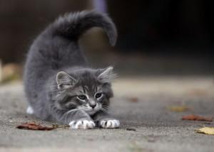 Лучшее имя для серого котенка