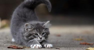 Как назвать кота серого цвета