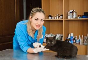 Ветеринар и кошка