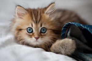 Котенок и как дать кличку
