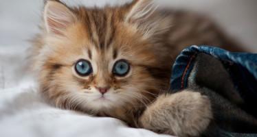 Назвать котенка русской кличкой