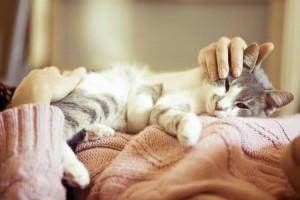 Как помочь кошке