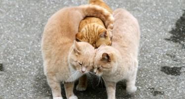 Самые ласковые и добрые породы кошек
